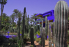 Marrakesh - Morocco: Majorelle Gardens - cactae - photo by Sandia