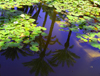 Marrakesh - Morocco: Majorelle gardens - palm trees reflected - photo by Sandia