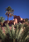 Morocco / Maroc - Ouarzazate: palms and ruins - photo by F.Rigaud