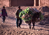 Morocco / Maroc - Tamegroute (Souss Massa-Draa / Zagora): donkey bringing the turnips to the market - photo by F.Rigaud