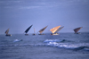 Mozambique / Moçambique - Inhambane: dhows on the horizon - Indian Ocean / dows no horizonte - photo by F.Rigaud