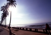 Mozambique / Mo�ambique - Maputo / Louren�o Marques: Indian ocean waterfront - coconut trees - avenida marginal - coqueiros (antiga avenida D. Manuel I) - photo by F.Rigaud