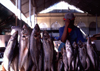 Mozambique / Mo�ambique - Maputo / Louren�o Marques: fish for sale at the Municipal market / Mercado municipal - peixe - carapaus - photo by F.Rigaud