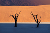 Namib desert - Deadvlei - Hardap region, Namibia: Two dead trees, muti-colored layers pan & dunes - photo by B.Cain