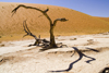 Namib Desert - Dead Vlei, Hardap region, Namibia: dead trees-some of them are 500 years old - photo by Sandia