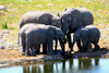 Etosha Park, Kunene region, Namibia: Elephants at a waterhole - Loxodonta africana - photo by Sandia