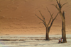 Namib desert - Deadvlei / Death Valley - Hardap region, Namibia: light and shade - dead trees - photo by J.Banks