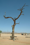 Namibia - Solitaire, Hardap region: a lone tree - photo by J.Banks