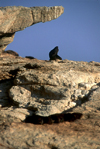 Namibia - Luderitz - Dias Point: seal posing under a rock - photo by G.Friedman