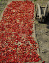 Nepal - Langtang region - wheelbarrow near dry hot chili peppers - photo by E.Petitalot