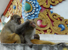 Kathmandu, Nepal: monkey family at Swayanbunath temple - photo by E.Petitalot