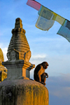 Kathmandu valley, Nepal: Swayambunath temple - monkey sitting on a stupa - Samhengu - photo by J.Pemberton