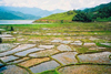 Nepal - Kathmandu valley: rice paddies (photo by J.Kaman)