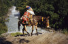 Annapurna area, Nepal: Asian donkey transporting a gas cylinder along a river - Annapurna Circuit - photo by W.Allgöwer