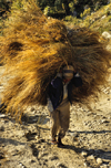 Annapurna area, Nepal: peasant carries hay - agriculture - Annapurna Himal - photo by W.Allgöwer