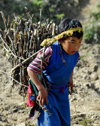 Nepal - Langtang region - a girl carrying a heavy bundle of sticks - photo by E.Petitalot