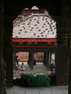 Nepal - Kathmandu: Durbar Square - roof with pigeons - photo by M.Samper