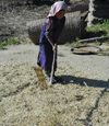 Nepal - Langtang region - Tamang young girl working with a flail - agriculture - photo by E.Petitalot