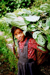 Nepal - Kathmandu valley: girl at harvest time (photo by G.Friedman)