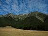 67 New Zealand - South Island - Ahuriri Valley - forest - Otago region (photo by M.Samper)