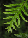 New Zealand - fern detail - photo by Air West Coast