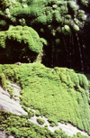 New Zealand - Moss and water dripping - photo by Air West Coast