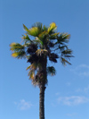 New Zealand - palm tree - photo by Air West Coast