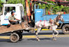 Managua, Nicaragua: horse drawn cart in the traffic of Av. Bolivar- photo by M.Torres