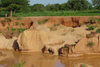 Nigeria - Minjibir - Kano State: red waters - erosion - photo by A.Obem