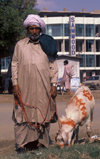 Pakistan - Karachi (Sindh / Sind): all set for the sacrifice - man wearing a dhoti, with his goat on Eid-ul-Azha / Eid-al-Adha, 10th day of the month of Dhul Hijja of the Hijri calendar - Muslim celebration - photo by R.Zafar