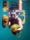 Mecherchar island, Rock Islands / Chelbacheb, Koror state, Palau: snorkler holding two jellyfish - Jellyfish lake - Ongeim'l Tketau - underwater image - photo by B.Cain