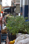 Panama City: Ruda (ruta graveolens) on a street market in Panama - herb used in folk remedies and religious symbolic rituals - photo by H.Olarte