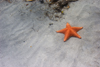 Panama - Bocas del Toro - Starfish on the beach - photo by H.Olarte