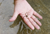 Panama - Bocas del Toro - woman's hand holding a small starfish - photo by H.Olarte