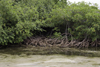 Galeta Island, Col�n province, Panama: mangrove forest protecting the coast - Smithsonian Tropical Research Institute, Galeta Point - photo by H.Olarte