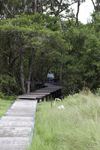 Galeta Island, Col�n province, Panama: boardwalk into the mangrove, Galeta Point, Smithsonian Tropical Research Institute - photo by H.Olarte