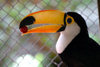 Paraguay - Asunci�n - Toucan with a fruit in its bill - photo by Amadeo Velazquez - Los tucanes se estudian en la familia Ramphastidae. Estas aves son naturales de las Am�ricas y en su mayor�a habitan en las selvas tropicales. La ubicaci�n se extiende des