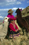 Cuzco region, Peru: Quechua girl with her grandmother and llamas- bucolic scene - Peruvian Andes - photo by C.Lovell