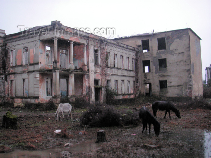 abkhazia3: Abkhazia - Gali: horses in the ruins of a school (photo by A.Kilroy) - (c) Travel-Images.com - Stock Photography agency - Image Bank