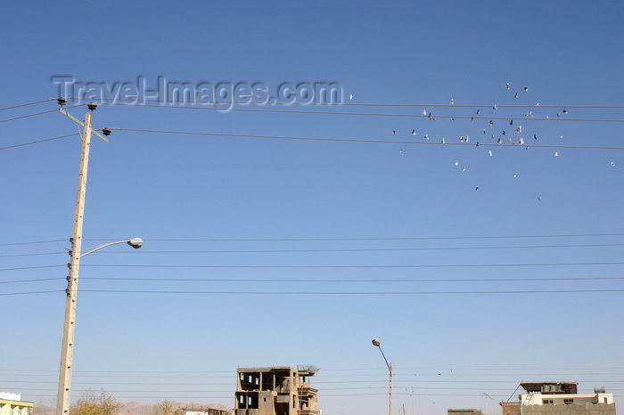afghanistan14: Afghanistan - Herat - pigeons in the air - photo by E.Andersen - (c) Travel-Images.com - Stock Photography agency - Image Bank