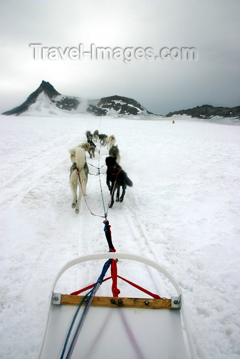 alaska100: Alaska - Skagway: Denver Glacier - on a dogsled (photo by Robert Ziff) - (c) Travel-Images.com - Stock Photography agency - Image Bank