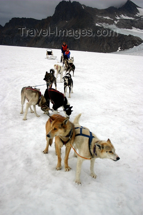 alaska101: Alaska - Skagway: Denver Glacier - dogs and dogsled (photo by Robert Ziff) - (c) Travel-Images.com - Stock Photography agency - Image Bank