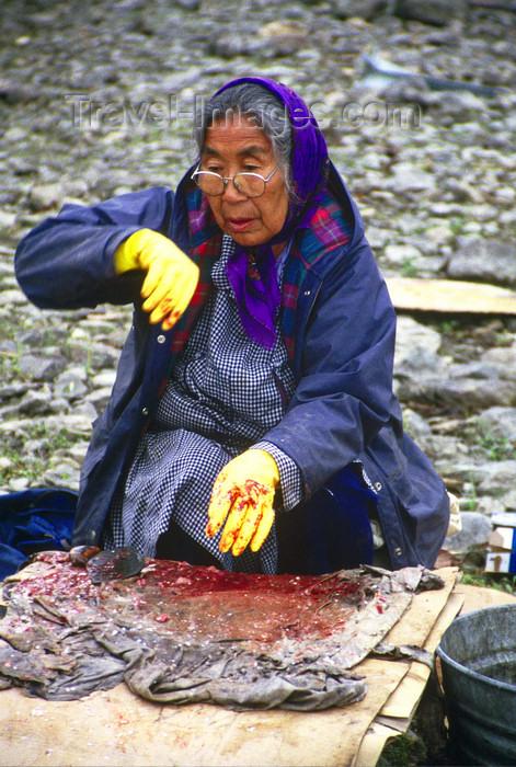 alaska137: Brooks range, Alaska: Athabascan old woman preparing salmon - photo by E.Petitalot - (c) Travel-Images.com - Stock Photography agency - Image Bank