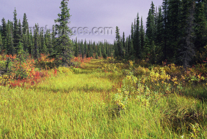 alaska150: Brooks range, Alaska: nice colours of autumn - photo by E.Petitalot - (c) Travel-Images.com - Stock Photography agency - Image Bank