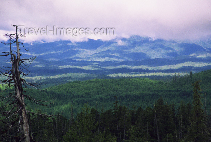 alaska187: Alaska - Prince of Wales island: pine forest - photo by E.Petitalot - (c) Travel-Images.com - Stock Photography agency - Image Bank
