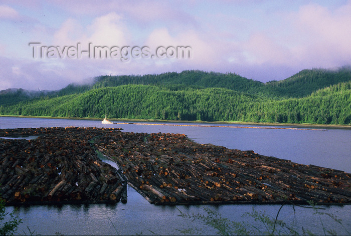 alaska197: Alaska - Prince of Wales island: tug-boat pulls thousands of trunks to a factory - photo by E.Petitalot - (c) Travel-Images.com - Stock Photography agency - Image Bank