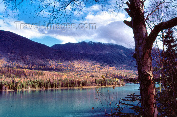 alaska2: Alaska - Anchorage / ANC: the fjord and the forest - Turnagain Arm of Cook Inlet - photo by F.Rigaud - (c) Travel-Images.com - Stock Photography agency - Image Bank