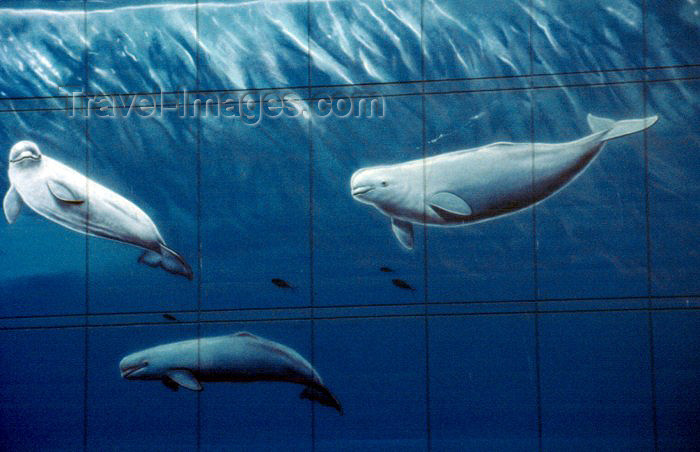 alaska48: Alaska - Anchorage: whales mural, the 'whaling wall', by Robert Wyland - east side of Town Square - WW54 'Alaska's Marine Life' - J.C. Penneys - photo by F.Rigaud - (c) Travel-Images.com - Stock Photography agency - Image Bank