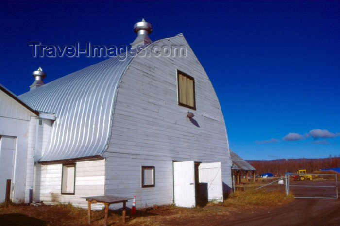 alaska5: USA - Alaska - Fairbanks / FAI: dairy farm - agriculture - barn - photo by F.Rigaud - (c) Travel-Images.com - Stock Photography agency - Image Bank