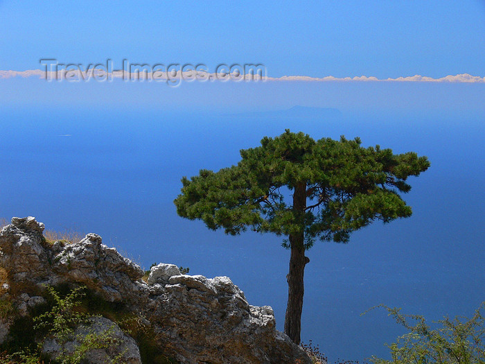 albania134: Llogara National Park, Vlorë country, Albania: pine tree and the Adriatic sea - photo by J.Kaman - (c) Travel-Images.com - Stock Photography agency - Image Bank